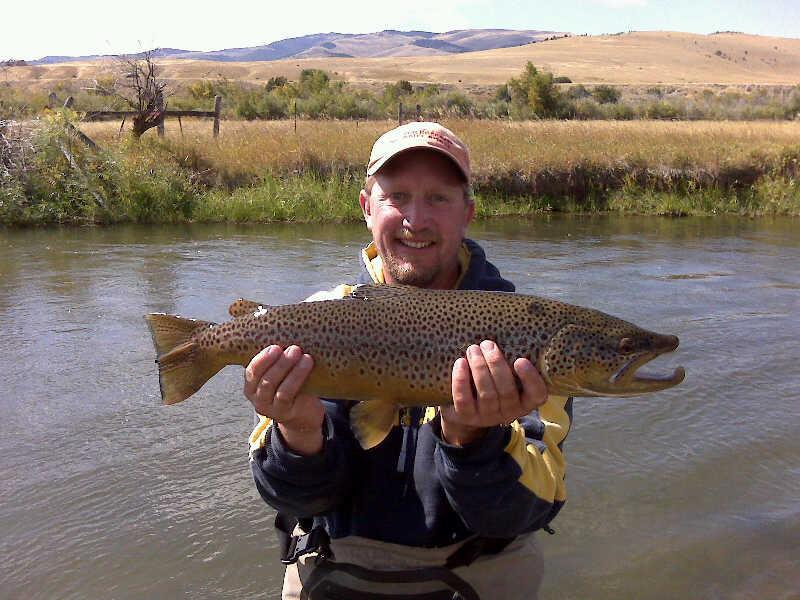 Madison Brown Trout